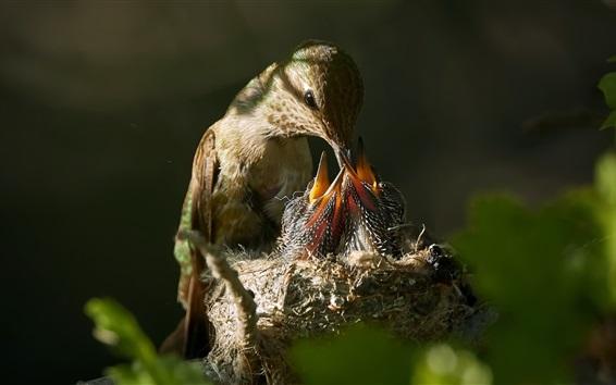 壁纸 喂鸟的小鸟