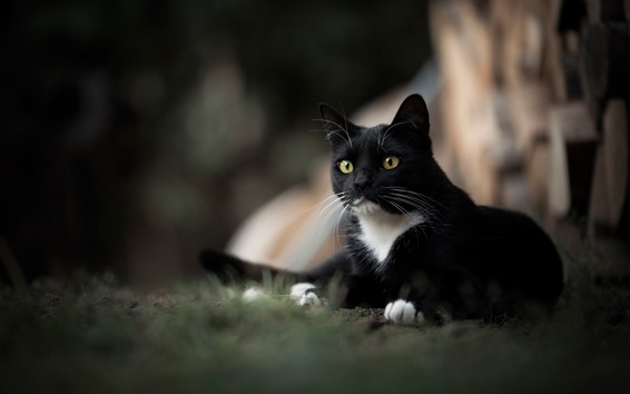 Papéis de Parede Gato preto, olhos amarelos, nebulosos