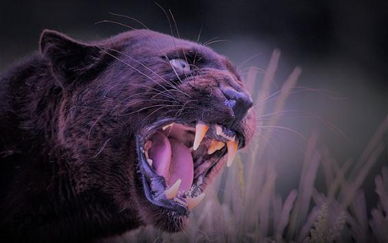 Papéis de Parede Pantera negra, com raiva, dentes
