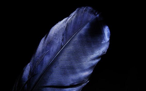 壁紙 青い羽のクローズアップ、黒い背景