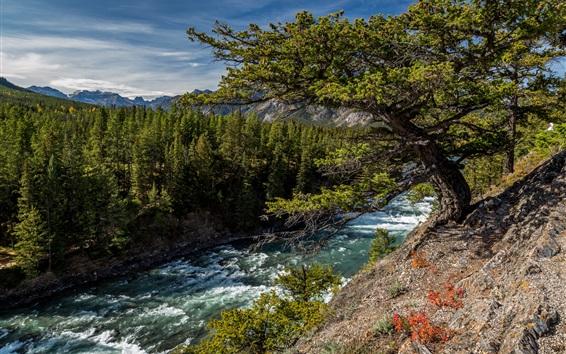 Обои Канада, Альберта, Лук, лес, деревья