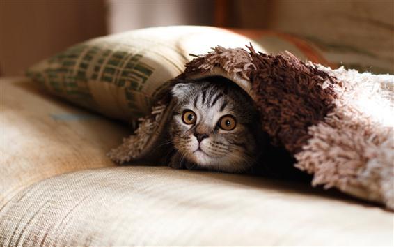 Обои Кошка, кровать, подушка