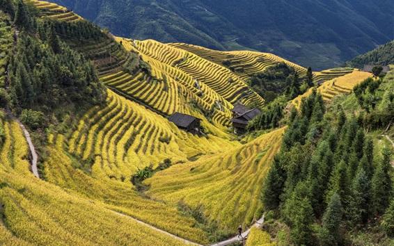 Wallpaper China, Longsheng County, beautiful terraced rice field, countryside