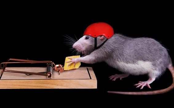 Fondos de pantalla Ratón inteligente, casco, queso, ratonera, animales divertidos