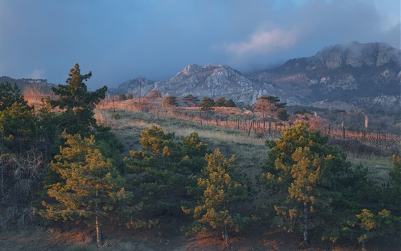 Wallpaper Crimea, forest, mountains, nature landscape