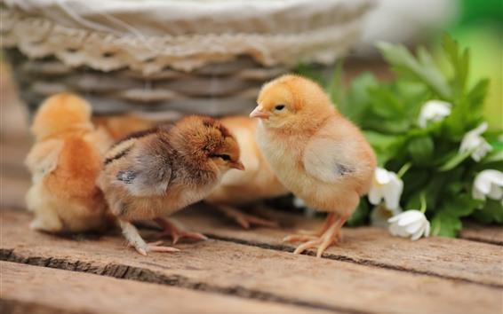 Wallpaper Cute chickens