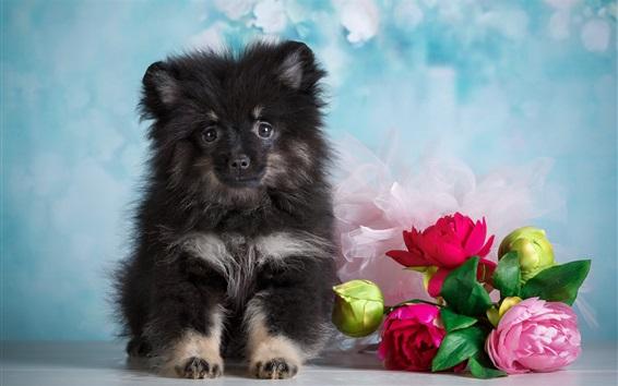 Papéis de Parede Cachorrinho fofo e flores