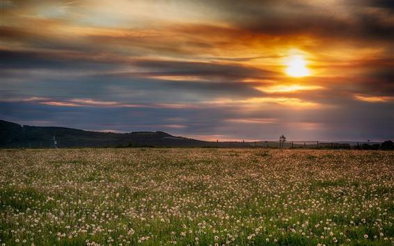 Обои Одуванчики, трава, небо, закат, облака