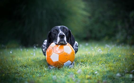 배경 화면 개와 축구, 잔디