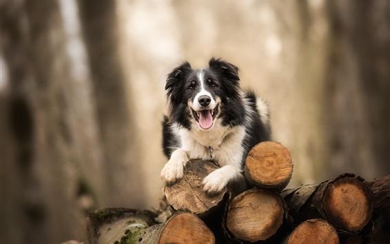 Wallpaper Dog, wood