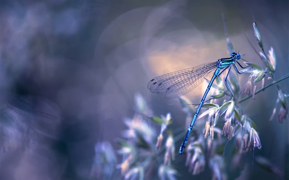 Wallpaper Dragonfly, grass, hazy