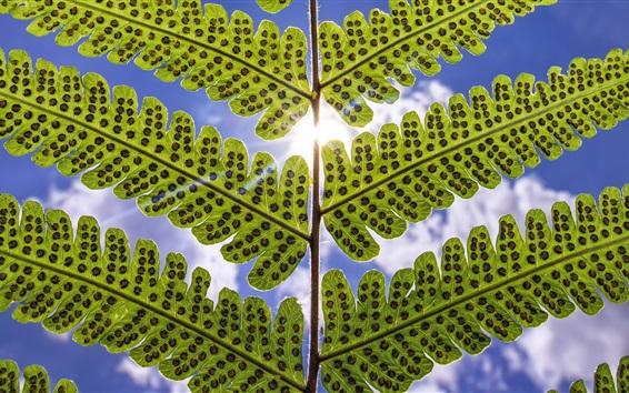 Papéis de Parede Folhas de samambaia, céu, nuvens