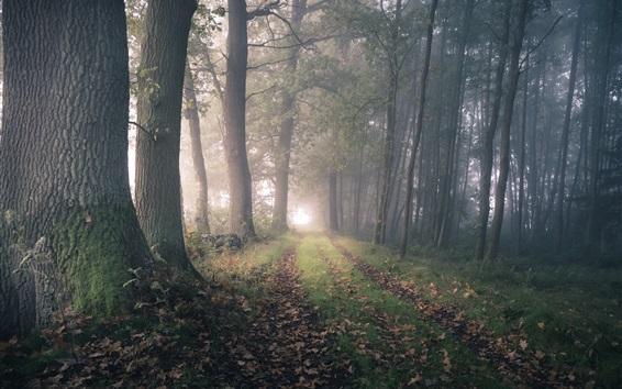 壁紙 森林、樹木、道、道路、霧