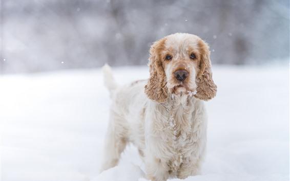 Papéis de Parede Cão peludo, neve, inverno