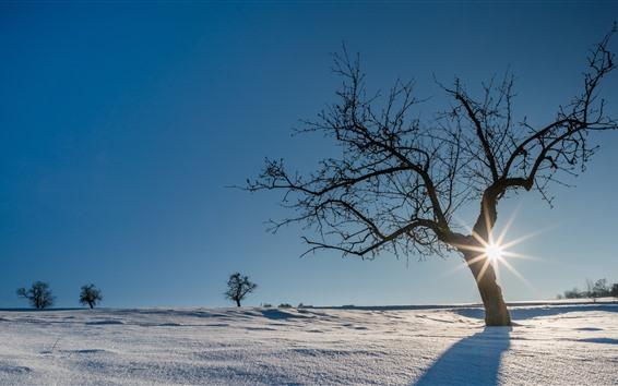 Fondos de pantalla Alemania, nieve, invierno, árboles, rayos de sol