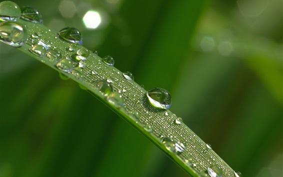 Fondos de pantalla Hoja de hoja de hierba, gotas de agua