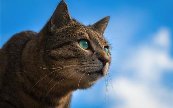 壁紙 緑の目の猫、青空