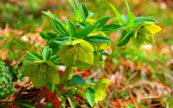 Fondos de pantalla Flores y hojas verdes