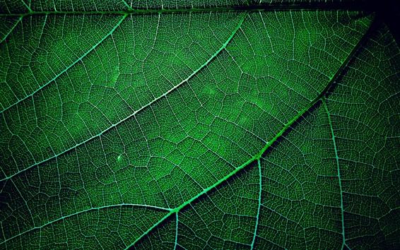Обои Макросъемка зеленого листа, текстура