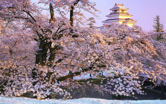 Papéis de Parede Japão, Fukushima, Aizuwakamatsu, sakura, templo