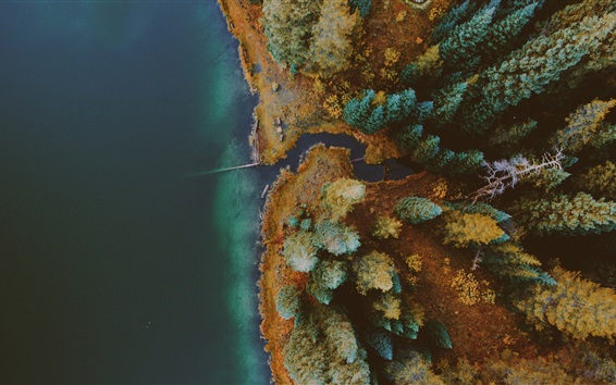 Wallpaper Lake, forest, autumn, top view