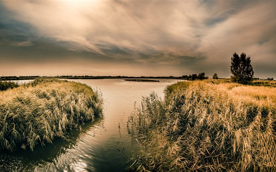 Wallpaper Lake, reeds, trees, clouds, dusk
