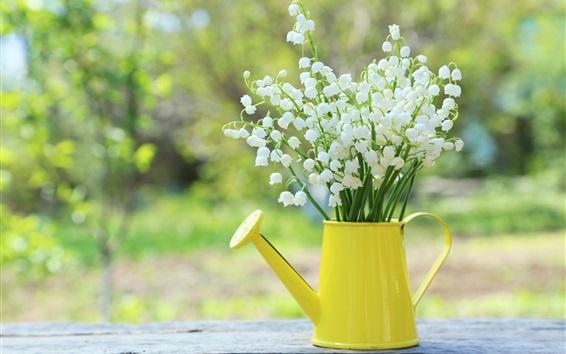 배경 화면 백합, 봄 꽃, 주전자