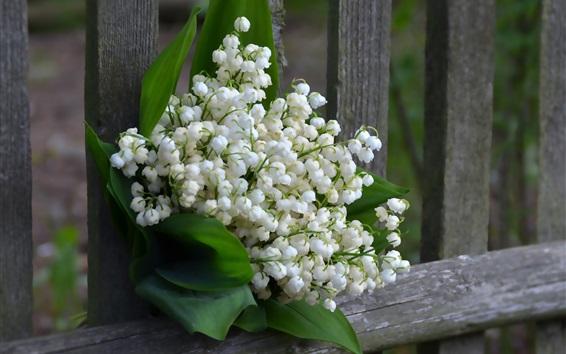 배경 화면 백합, 백합, 꽃다발