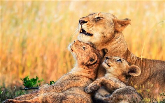 Fondos de pantalla Leones, leona, cachorros, África