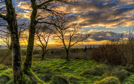 Wallpaper Northern Ireland, UK, nature landscape, grass, trees, clouds, sunset