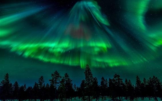 Обои Северное сияние, звезды, лес, ночь