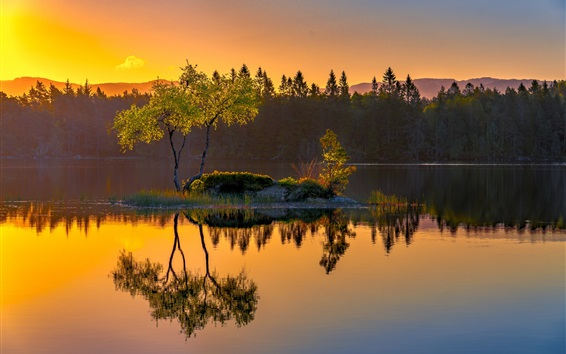 壁纸 挪威,岛,湖,水反射,树木,早晨