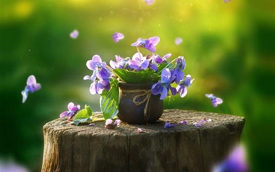 Wallpaper Pansy, purple flowers, stump