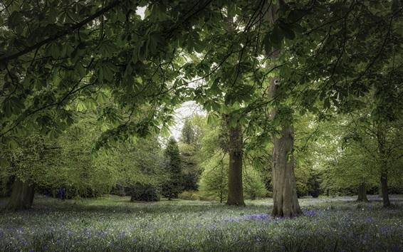 Wallpaper Park, trees, grass, flowers, summer
