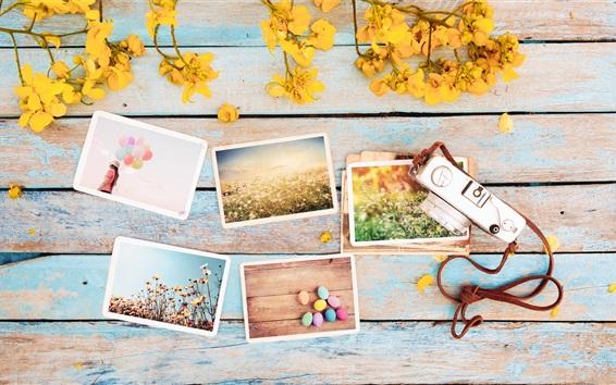 Обои Фотографии, цветы, камера
