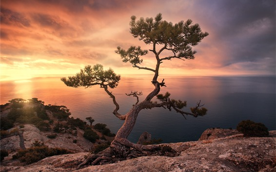 Wallpaper Pine tree, sea, sunset