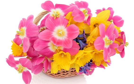 Wallpaper Pink and yellow flowers, white background