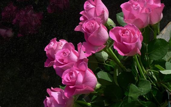 Wallpaper Pink roses, flowers, black background