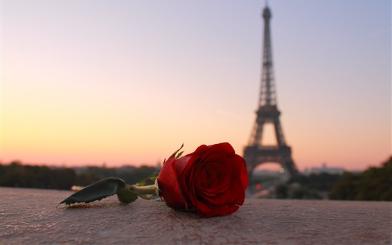 Wallpaper Red rose, Eiffel Tower, Paris