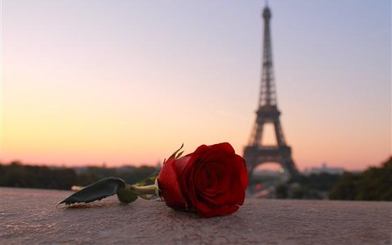 Fondos de pantalla Rosa roja, Torre Eiffel, París