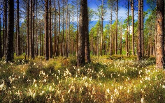 Обои Шотландия, Великобритания, деревья, лес, природа
