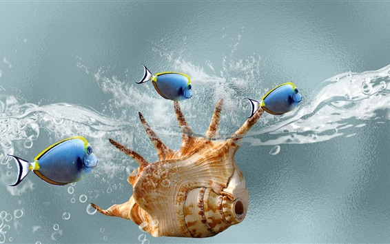 Papéis de Parede Concha e peixe