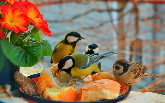 Обои Некоторые птицы едят торт, цветы