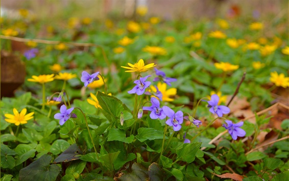 Wallpaper Spring yellow purple flowers
