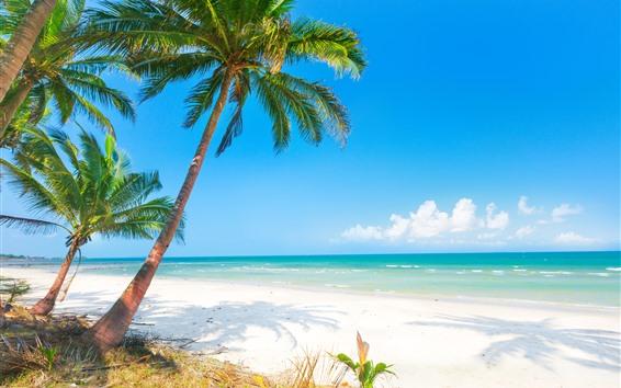 Wallpaper Summer Beach Palm Trees Sea 3840x2160 Uhd 4k Picture Image