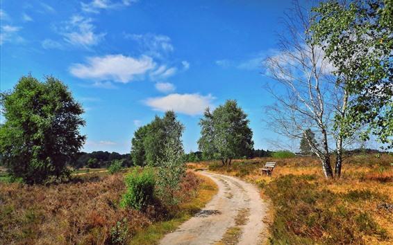 Wallpaper Summer, road, trees, bench