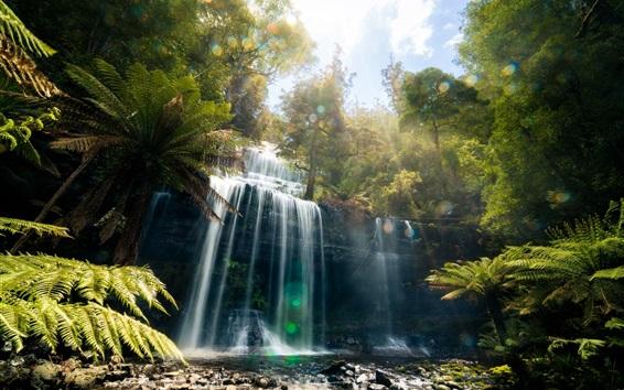 Papéis de Parede Tasmânia, linda cachoeira, selva