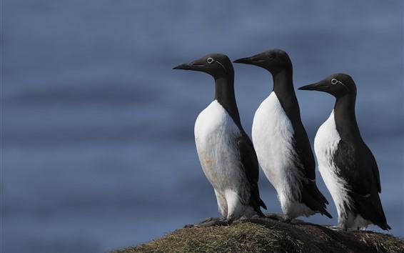 Fondos de pantalla Tres pájaros