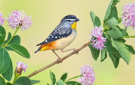 Papéis de Parede Galho de árvore, folhas, pássaro