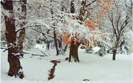 Wallpaper Trees, thick snow, winter